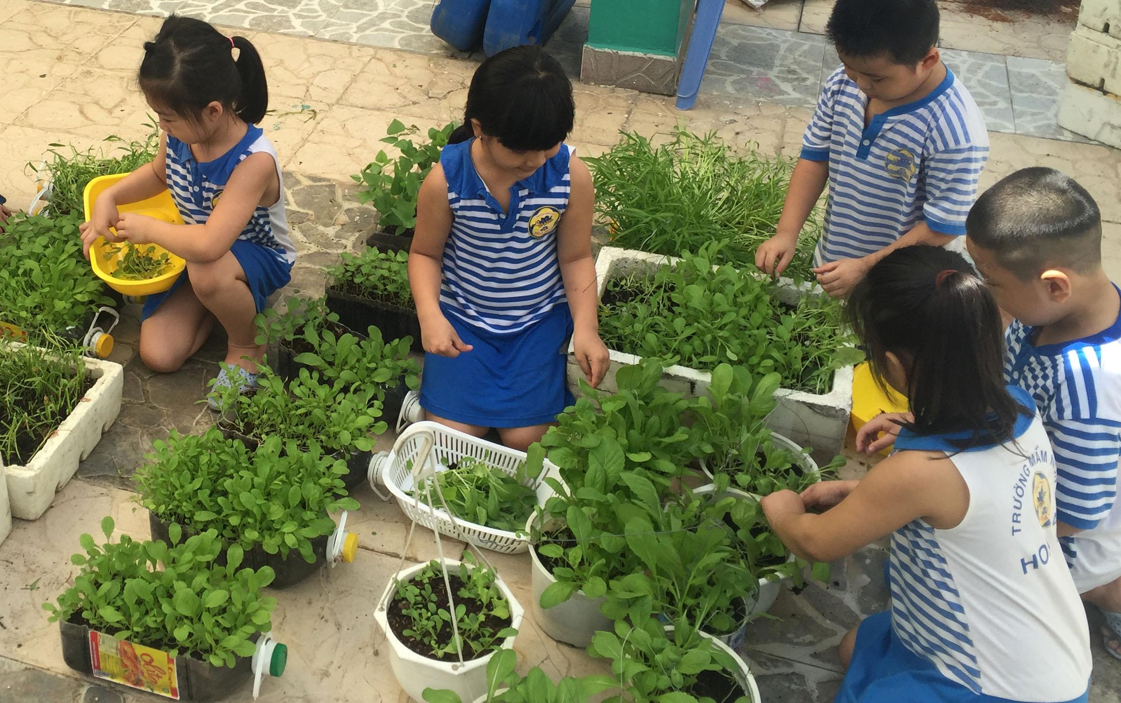 Vườn rau của bé